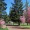 Virágzó fák 4