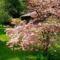 Virágzó fák 9