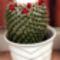 Hajni-Kaktuszai. 3