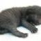 újszülött-macska
