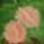 Virág tálban