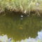 Patty,tó, hal, teknős