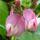 galildah,Hargita megyéből mezei virágok,gyerek,táj,bogár,kirándulás,fára fest hagyományos festékkel
