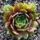 Klári és Tibi kaktuszai és pozsgásai
