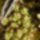 Miniatur_kaktusz_303042_63385_t