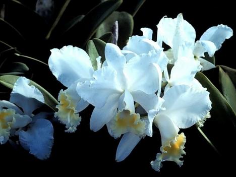 virág14