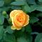 virág6