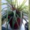 Növényeim.--Hajni 4