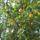Út menti díszes növények