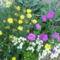 virág csoport