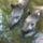 Zoo_345382_40973_t