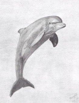 delfin rajz