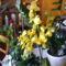 Oncidium orchide távolról