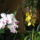 Orchideak_348417_10878_t