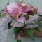 Rózsaszín kála
