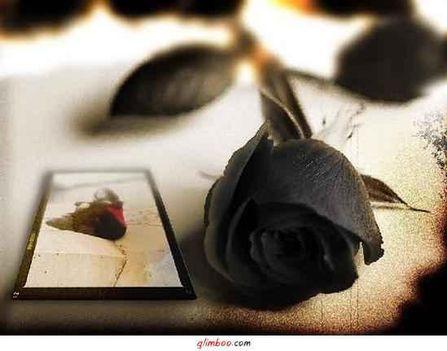 fekete rózsa