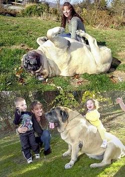 óriás kutyus 2