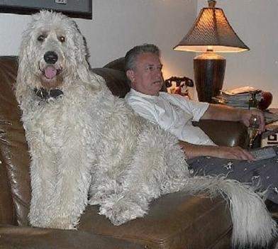 óriás kutyus 7