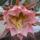 Virágaim, növényeim