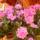 A virágaim...