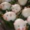 tojás egérkék