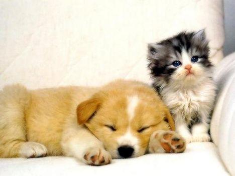 love cica
