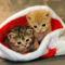 télapó cicák