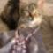 cica is segített az ékszer fotózásnál
