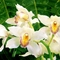 Orchideák2