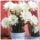 Sárvári Gyuláné -virágok