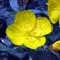Virágok15