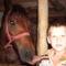 Maros megye dijazott lova.2009-ben...