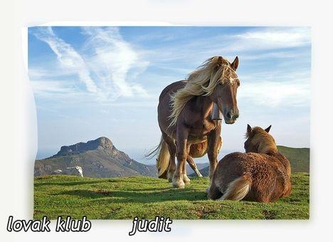 szép ló_7