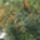 Galambok