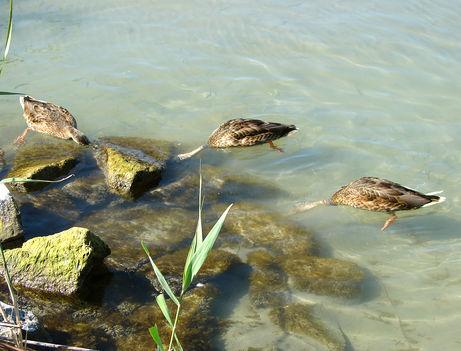 Balaton, csodás képei--Hajni 11