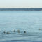Balaton, csodás képei--Hajni 4