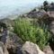 Balaton, csodás képei--Hajni 8