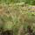 Klári és Tibi kaktuszai