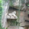 feher-tigris