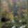 Plitvice_2004_osz_4_367285_62644_t
