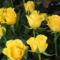 Virágok 7