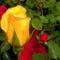 Virágok 8