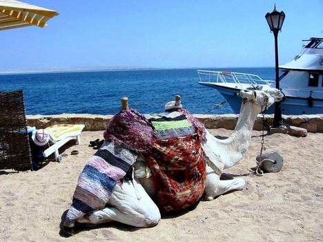 Egyiptomi tengerparton