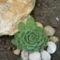 ez is egy részlete a kialakuló kis sziklakertemnek