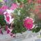 virágok... 5