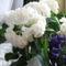 Virágok közt 301