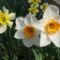 Virágok közt 303