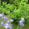Virágok közt 394