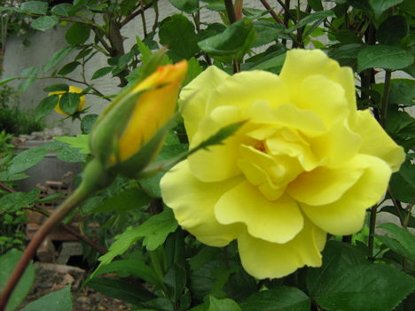 Virágok közt 411