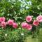 Virágok közt 451